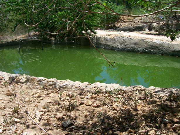 Gosana Fish Farming
